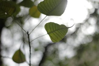 leaf_jnzl public domain